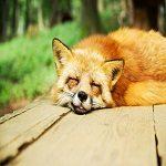 寝違えの原因とは?寝違えない為にはどうするべきか
